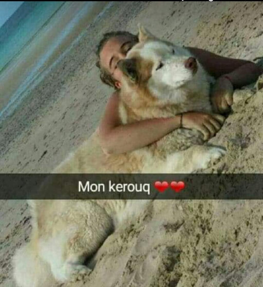 Kerouq, Sibérien Husky, 4 Ans et veut vivre sa vie. Dept 14.ADOPTE - Page 3 _2019010