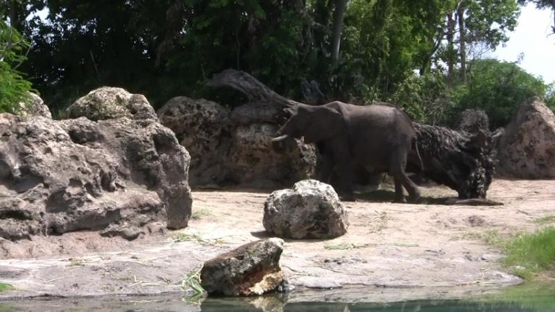 [Walt Disney World Resort] Mon Trip Report est enfin FINI ! Les 29 vidéos sont là ! - Page 9 3020ju27