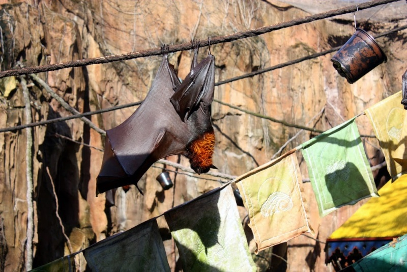 [Walt Disney World Resort] Mon Trip Report est enfin FINI ! Les 29 vidéos sont là ! - Page 9 Img_2428