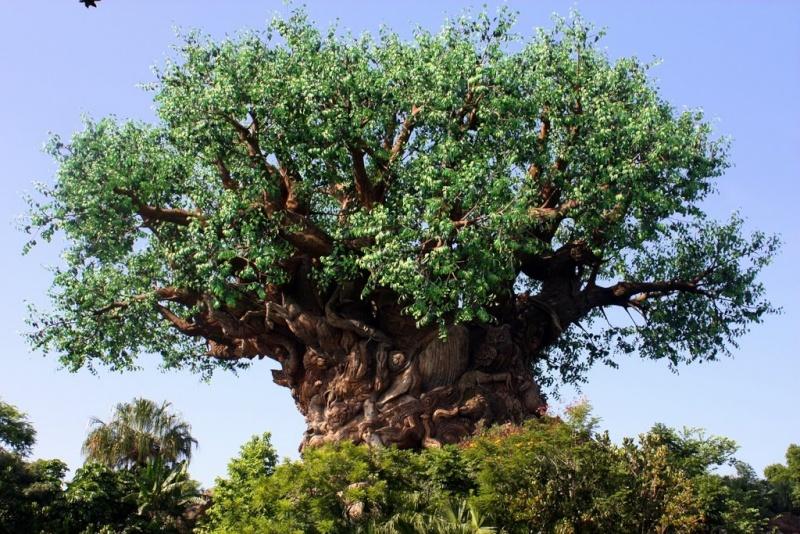 [Walt Disney World Resort] Mon Trip Report est enfin FINI ! Les 29 vidéos sont là ! - Page 9 Img_2432