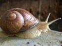 Les escargots Thumbn10