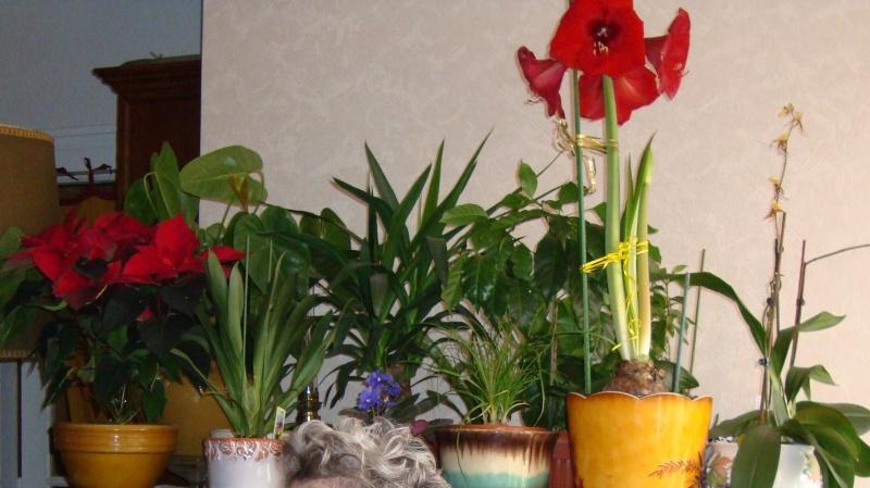 Orchidée 'Odontoglossum Vuylstekeara Cambria' Mes_fl10