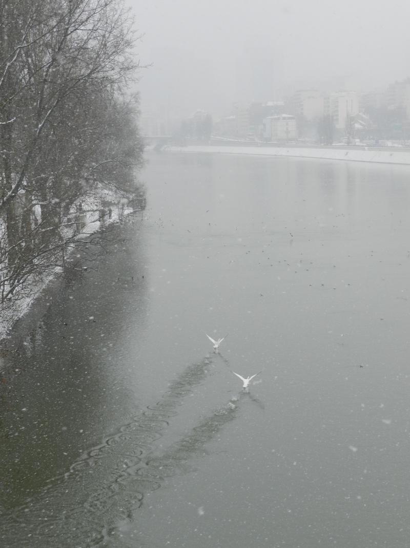 La neige sur l'île de la Jatte (20 janvier 2013) Levall12