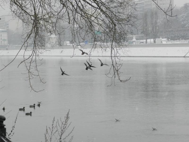 La neige sur l'île de la Jatte (20 janvier 2013) Levall17