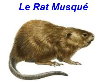Sécheresse en Mayenne Ratmus10