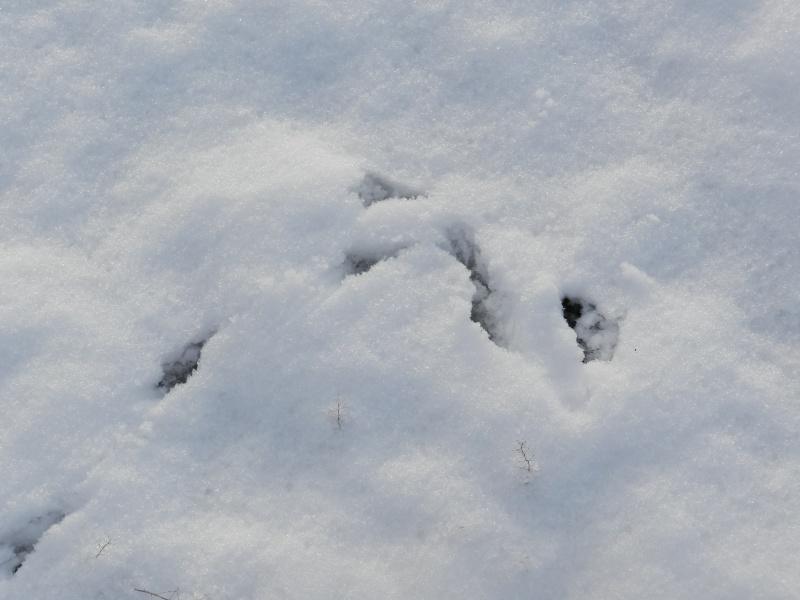 neige ludique en Mayenne (26 janvier 2013) Vauvar19