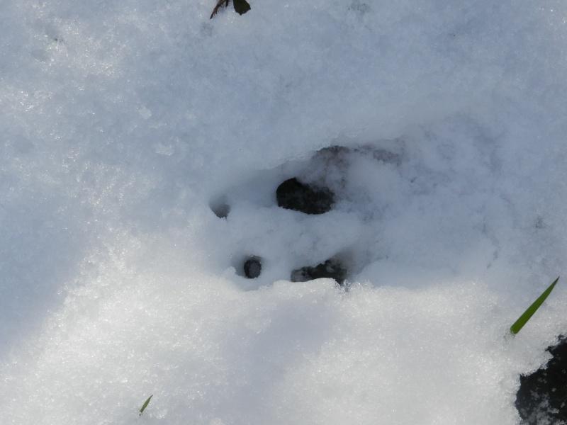 neige ludique en Mayenne (26 janvier 2013) Vauvar23