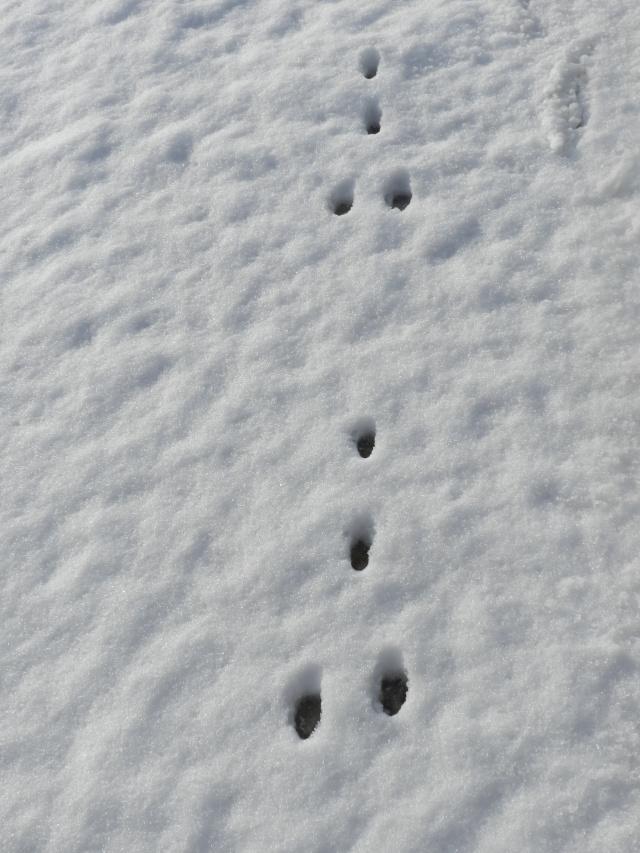 neige ludique en Mayenne (26 janvier 2013) Vauvar25