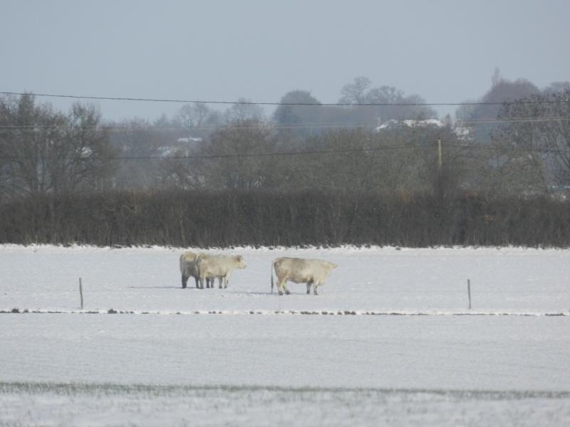 neige ludique en Mayenne (26 janvier 2013) Vauvar26