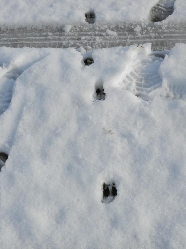 neige ludique en Mayenne (26 janvier 2013) Vauvar33