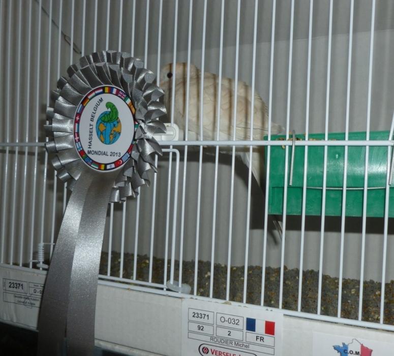 Mondial 2013 à Hasselt (palmarès, photos, commentaires). Michel15