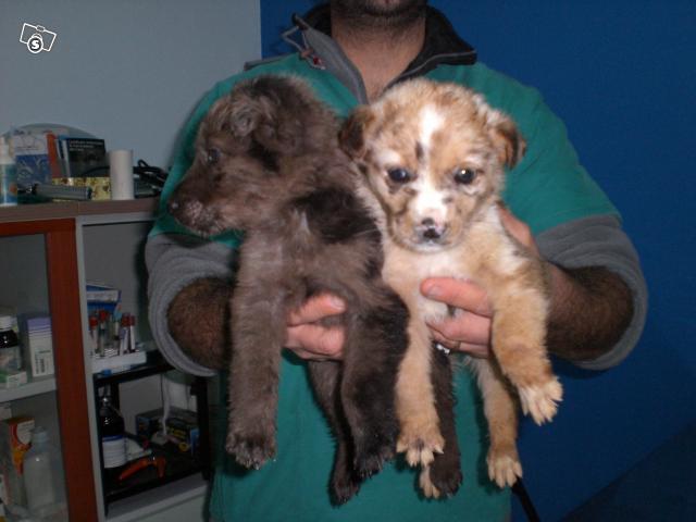 Due cucciolotti in cerca d'affetto 21687311
