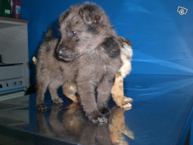 Due cucciolotti in cerca d'affetto 21772510