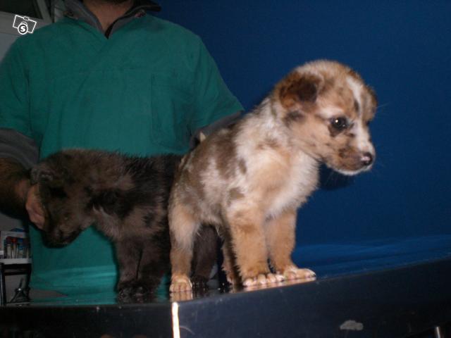 Due cucciolotti in cerca d'affetto 21857810