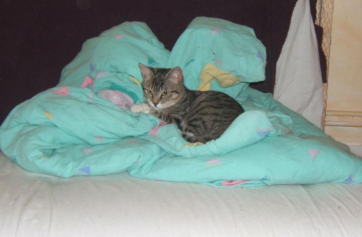 Maya et Sury, 2 fifilles nées le 7 septembre 2009 (4 mois) Maya_112
