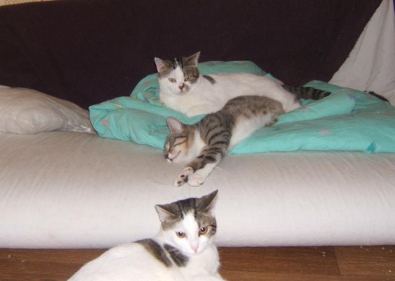 Maya et Sury, 2 fifilles nées le 7 septembre 2009 (4 mois) Maya_113