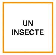 SOIRÉE SPEED Octobre 18-HALLOWEEN > 1 JEU Ln83-178