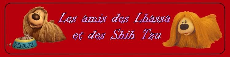 Les Amis des Lhassa Apso et des Shih tzu