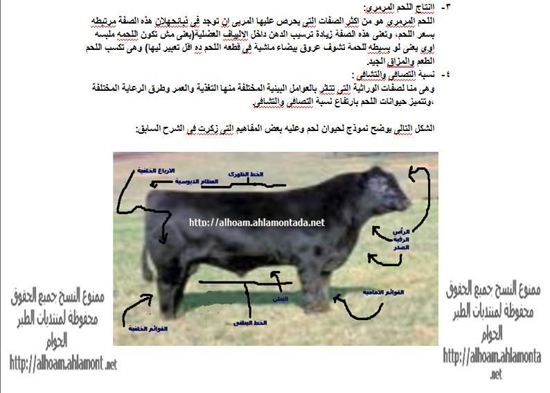 ماشية اللحم الجزء الاول 310