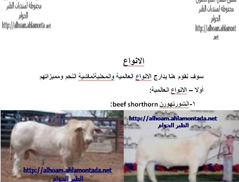 ماشية اللحم الجزء الاول 410