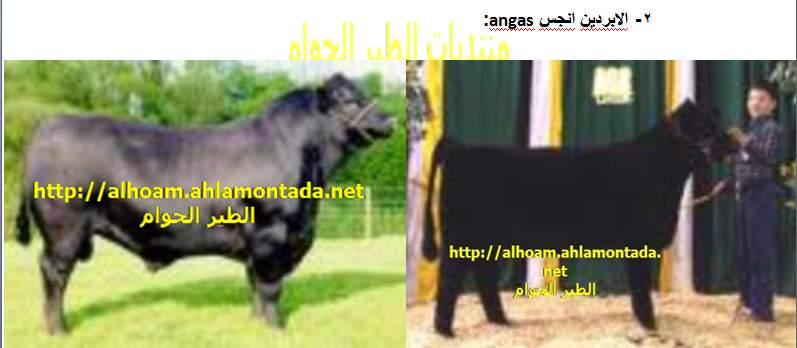 ماشية اللحم الجزء الاول 710