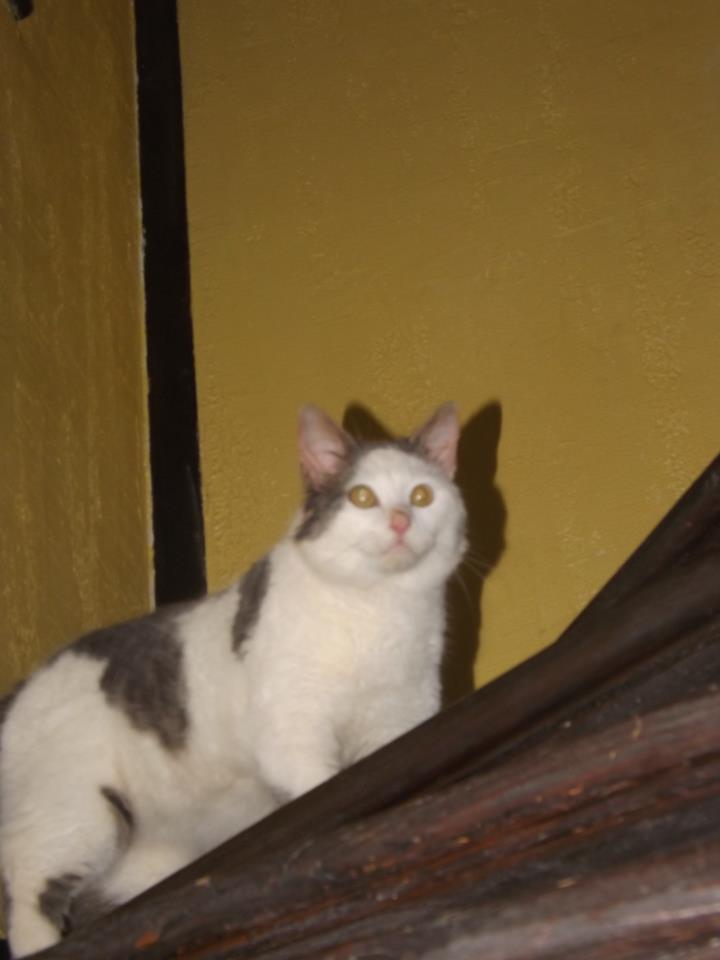 URGENCE pour deux chatons avant demain soir Chat10