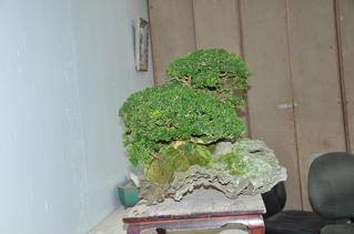 Rock planting named 'Pandora' Pandor11