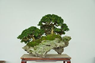 Rock planting named 'Pandora' Pandor12