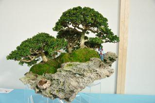 Rock planting named 'Pandora' Pandor14