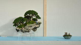Rock planting named 'Pandora' Pandor15