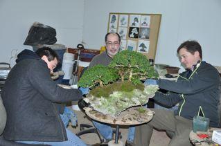 Rock planting named 'Pandora' R_b_an10