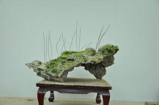 Rock planting named 'Pandora' Stone_11