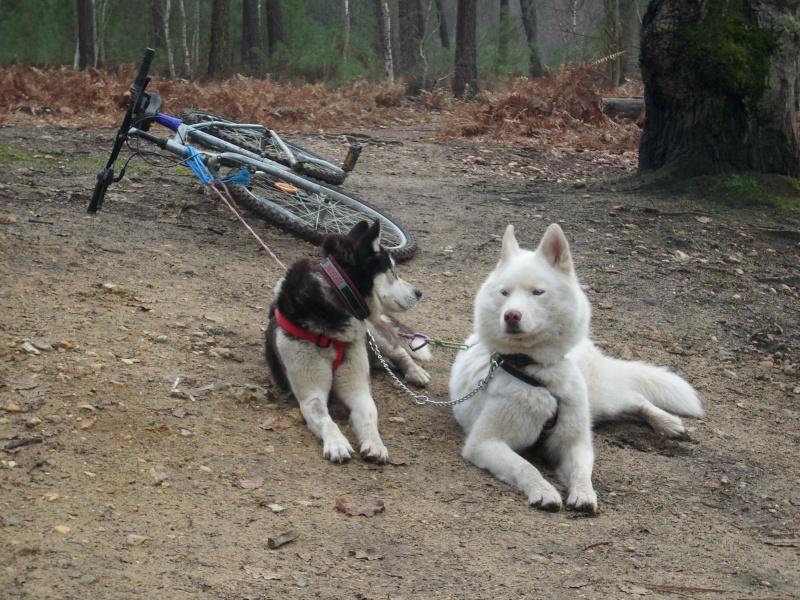 photos des premières randos de mes loups 01010