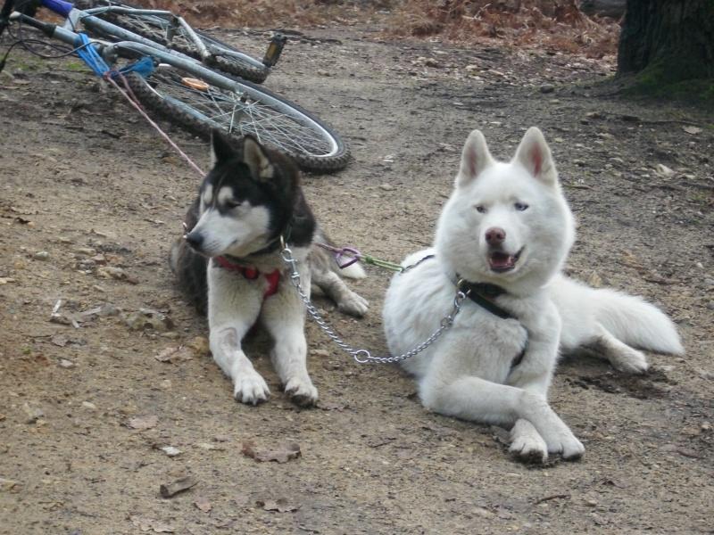 photos des premières randos de mes loups 01610