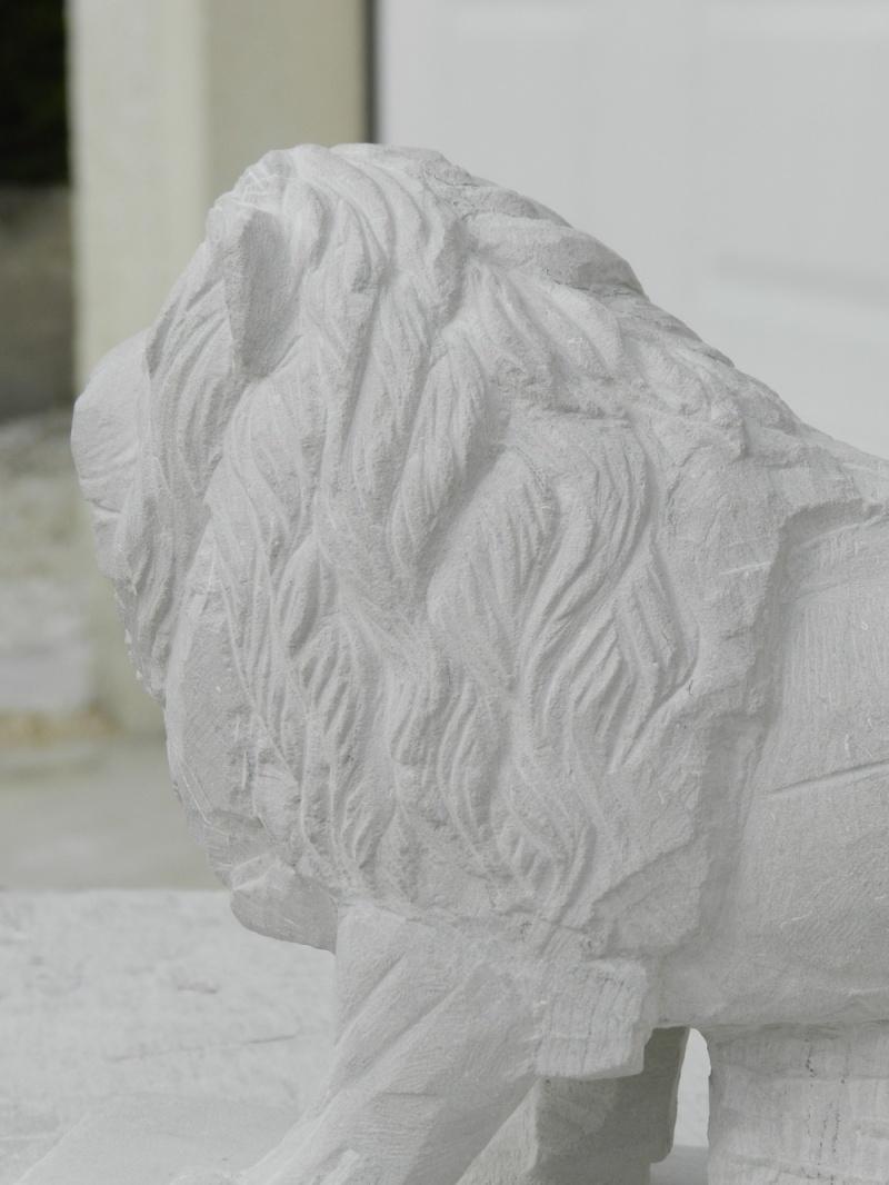 Lion Dscn4711