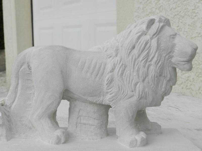 Lion Dscn4712