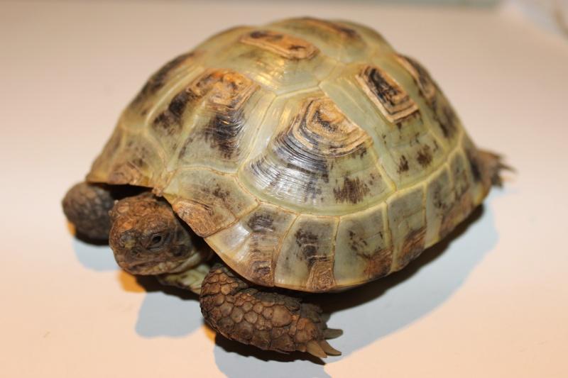 URGENT tortue qui a perdu 1/3 de son poids  - Page 2 Img_1111