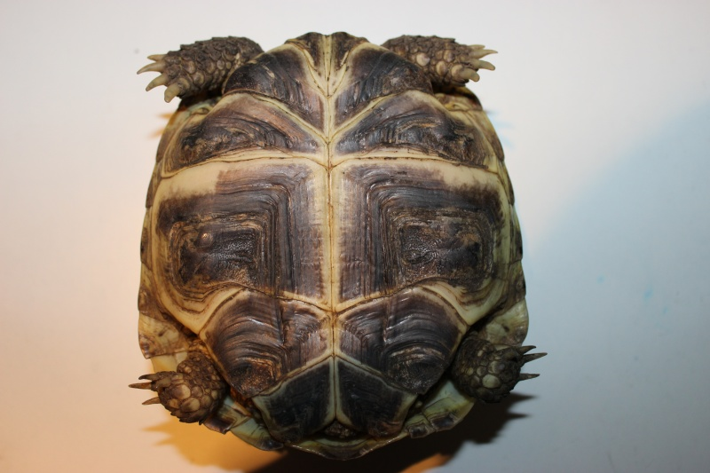 URGENT tortue qui a perdu 1/3 de son poids  - Page 2 Img_1112