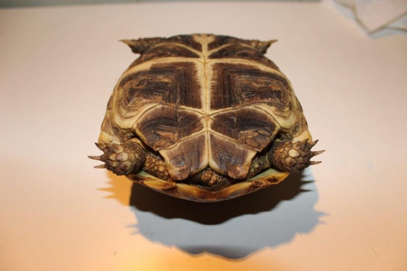 URGENT tortue qui a perdu 1/3 de son poids  - Page 2 Img_1113
