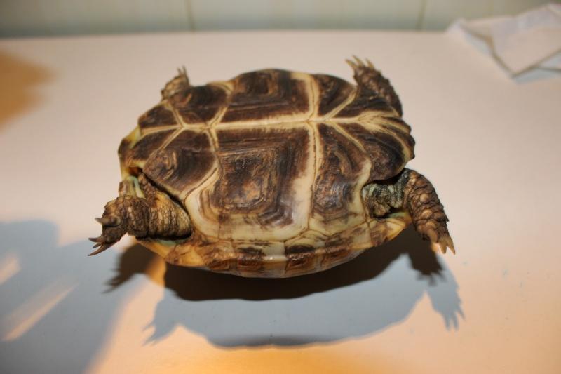URGENT tortue qui a perdu 1/3 de son poids  - Page 2 Img_1114