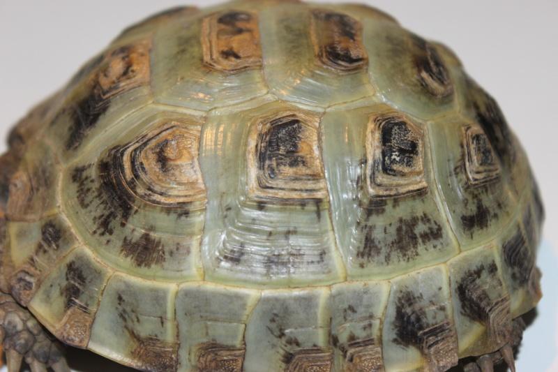 URGENT tortue qui a perdu 1/3 de son poids  - Page 2 Img_1115