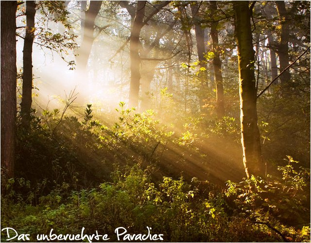 Kapitel 3: Das unberührte Paradies Kapite10