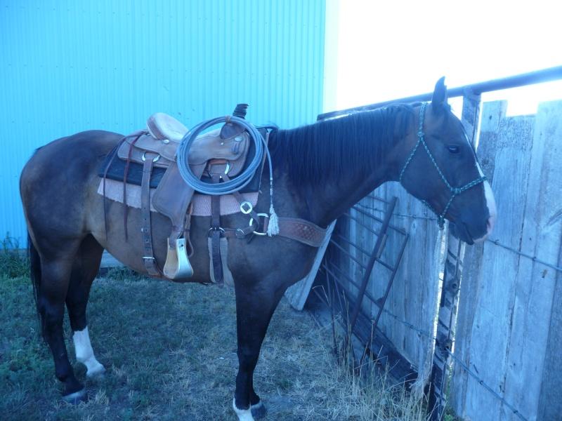 Tourisme à cheval P1060312