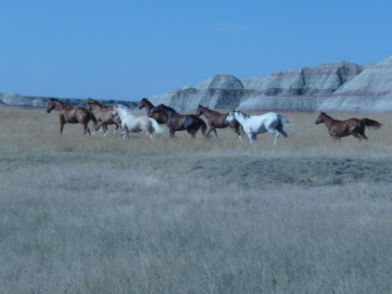 Tourisme à cheval P1060410
