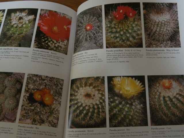 """Really wanting a copy of the """"new cactus lexicon""""  13710"""