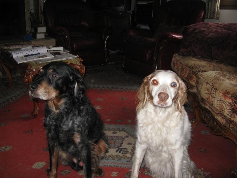 SOS Recherche des dons pour soigner Lolly ( ex Olly ) - aujourd'hui Louve n'est plus mais Lolly aurait besoin de plusieurs parrains pour les frais vétérinaire de MMme H - parrainée par Santig du - - Page 2 Img_1910