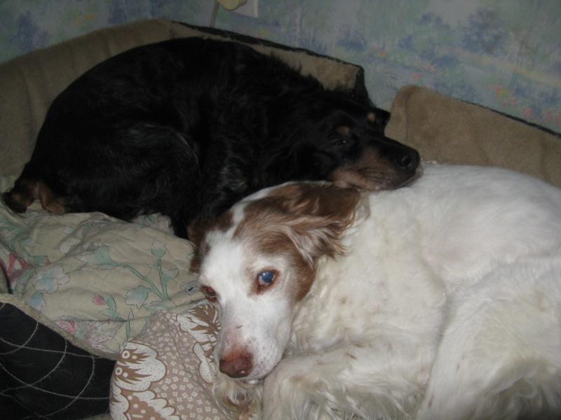 SOS Recherche des dons pour soigner Lolly ( ex Olly ) - aujourd'hui Louve n'est plus mais Lolly aurait besoin de plusieurs parrains pour les frais vétérinaire de MMme H - parrainée par Santig du - - Page 2 Img_1911
