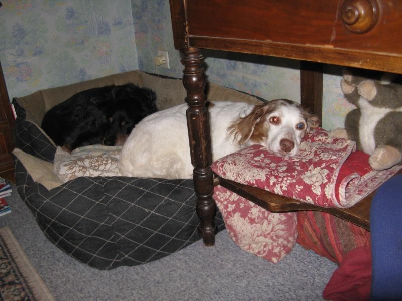 SOS Recherche des dons pour soigner Lolly ( ex Olly ) - aujourd'hui Louve n'est plus mais Lolly aurait besoin de plusieurs parrains pour les frais vétérinaire de MMme H - parrainée par Santig du - - Page 2 Img_1912