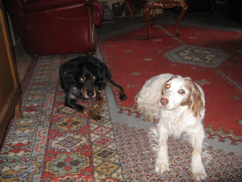 SOS Recherche des dons pour soigner Lolly ( ex Olly ) - aujourd'hui Louve n'est plus mais Lolly aurait besoin de plusieurs parrains pour les frais vétérinaire de MMme H - parrainée par Santig du - - Page 2 Img_1913