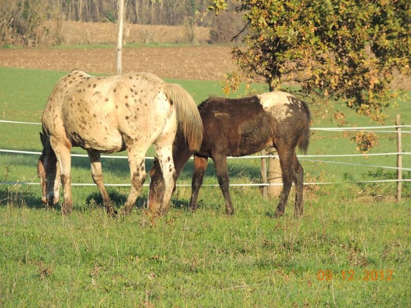 Mes chevaux, un mélange d'un peu tout le monde! - Page 3 00710